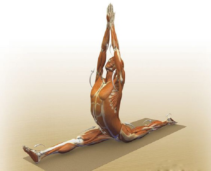 Yoga Anatomy India